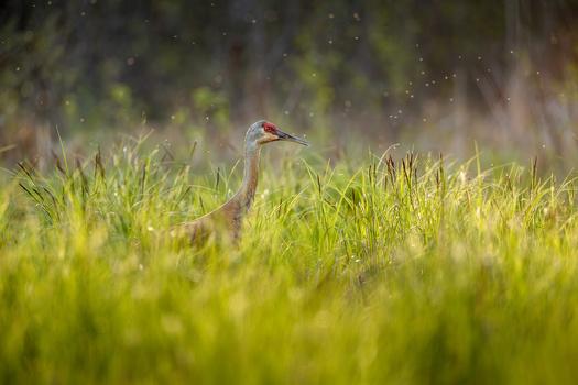 Background Basics for Wildlife Photography