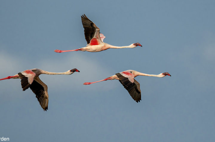 Using A Monopod For Nature And Wildlife Photography