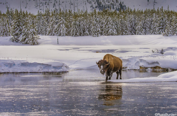 Wildlife Photography: Steps For Success