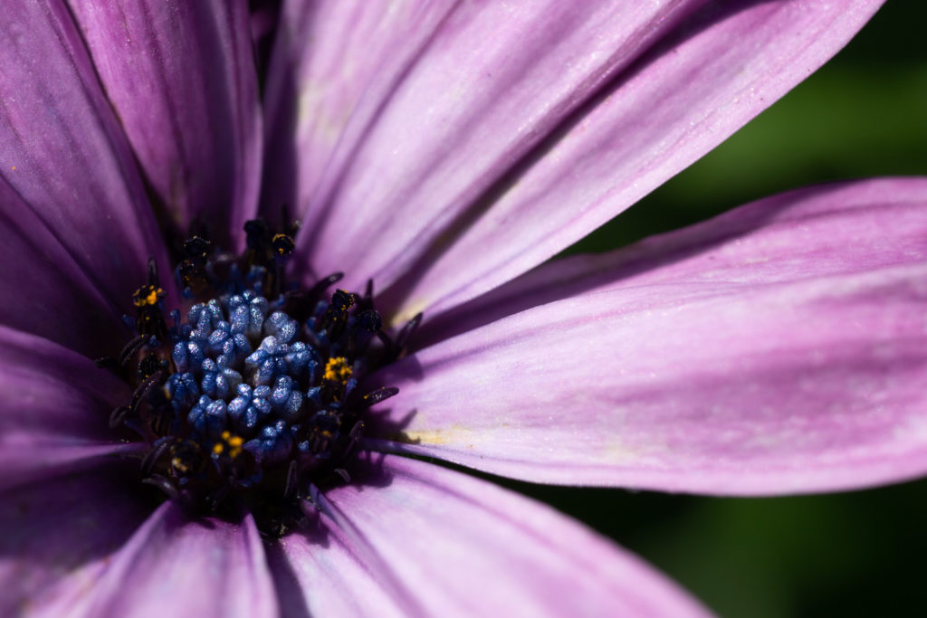 7 Ways manual focus can improve your photography
