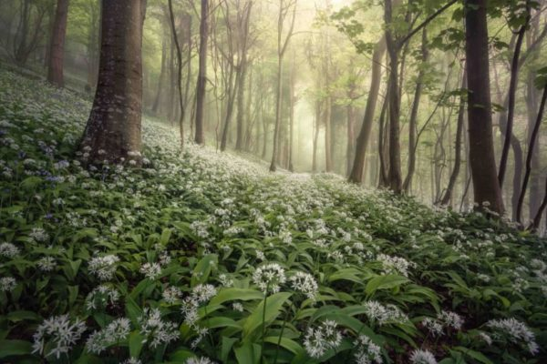 Landscape Photographer of the Year 2021 open for entries soon