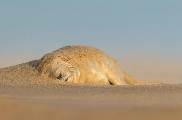 How to take award-winning wildlife shots