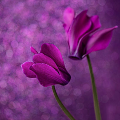 How to take better flower photographs