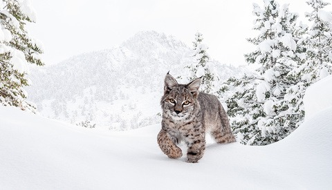 We Interview Photographer Robert Yone on the Art of Camera Trap Photography
